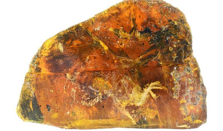 amber bird ready4 - Những điều thú vị về Hổ Phách