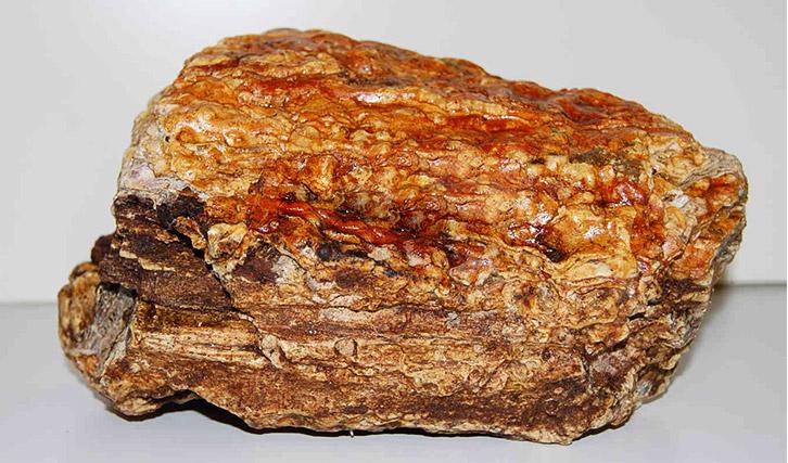 amber natural london museum - Những điều thú vị về Hổ Phách
