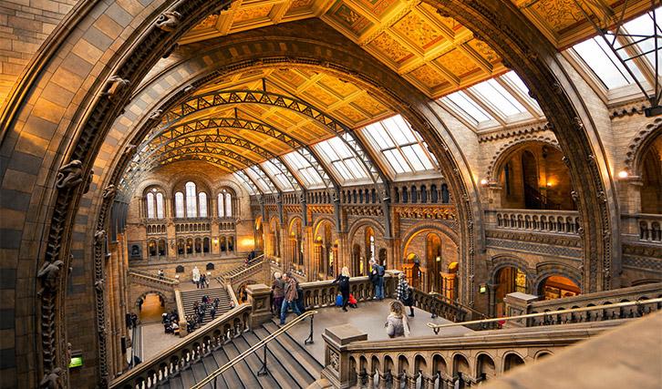 natural london museum - Những điều thú vị về Hổ Phách